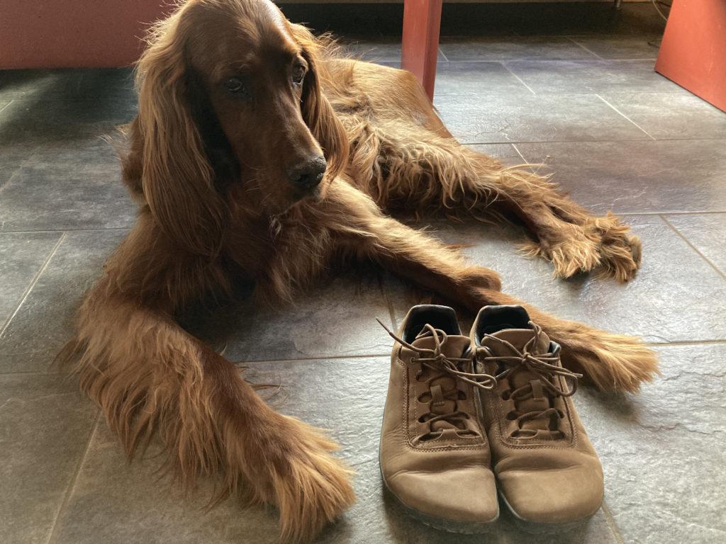 barefoot shoe and dog